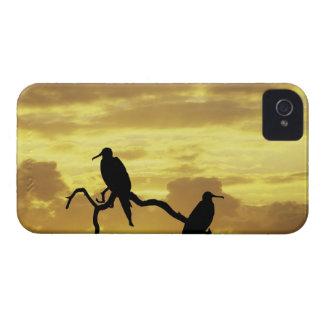Ecuador, Galapagos Islands. Silhouette of Case-Mate iPhone 4 Case