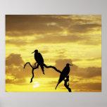 Ecuador, Galapagos Islands. Silhouette of Poster