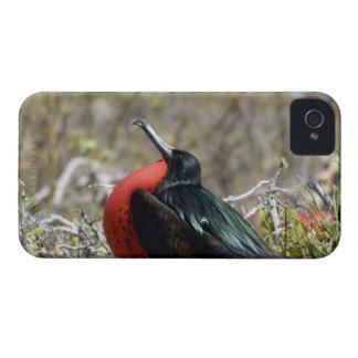 Ecuador, Galapagos, North Seymour. Great iPhone 4 Case