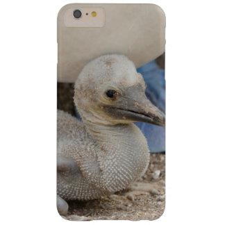 Ecuador, las Islas Galápagos, Espanola, Punta Funda Para iPhone 6 Plus Barely There
