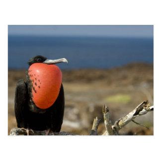 Ecuador, las Islas Galápagos, isla de Genovesa. Postal