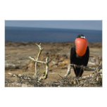 Ecuador, las Islas Galápagos, isla de Genovesa. Pr Cojinete