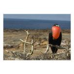 Ecuador, las Islas Galápagos, isla de Genovesa. Pr Impresion Fotografica