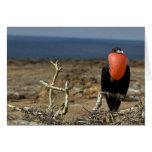 Ecuador, las Islas Galápagos, isla de Genovesa. Pr Felicitaciones