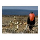Ecuador, las Islas Galápagos, isla de Genovesa. Pr Tarjetas Postales