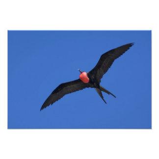 Ecuador, las Islas Galápagos. Torre de la isla de  Fotografía