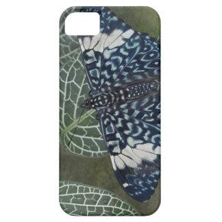 Ecuador, Orellana, Napo River. Hamadryas iPhone SE/5/5s Case