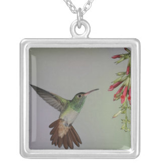 Ecuador, Tandayapa Bird Lodge. Rufous-tailed Silver Plated Necklace