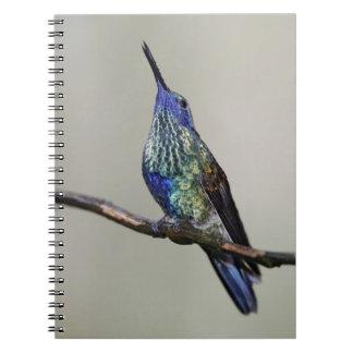 Ecuador, Tandayapa Bird Lodge. Sparkling Notebook