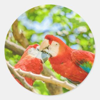 Ecuadorian Parrots at Zoo, Guayaquil, Ecuador Classic Round Sticker