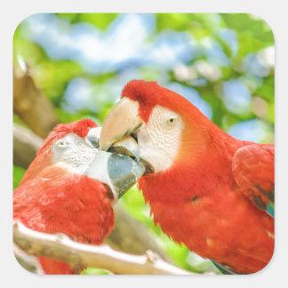 Ecuadorian Parrots at Zoo, Guayaquil, Ecuador Square Sticker