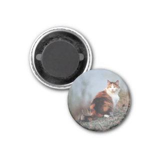 Edana - imán: 1 1/4 pulgada imán redondo 3 cm