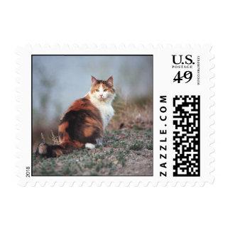 Edana - postage, small stamp