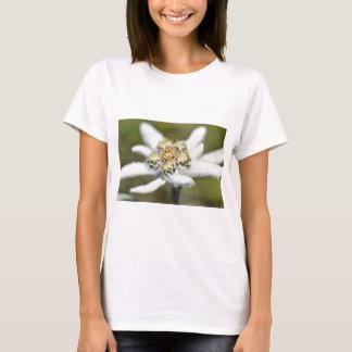 Edelweiss Alpine flower T-Shirt