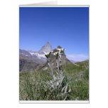 Edelweiss and Matterhorn Card