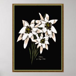 Edelweiss Artwork Print