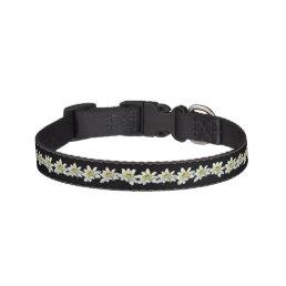 Edelweiss Dog Collar