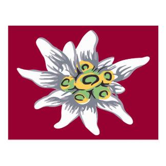 Edelweiss flower postcard