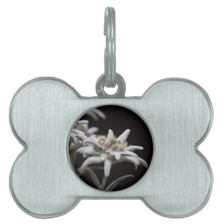 edelweiss in the mountain pet name tag
