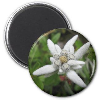 Edelweiss Magnet