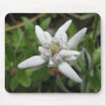 Edelweiss Mouse Pad