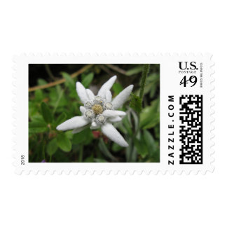 Edelweiss Postage