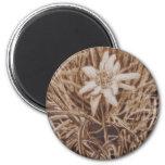 Edelweiss - Stella alpina 2 Inch Round Magnet