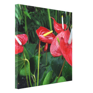 Eden Project Botanical Red Canvas Print