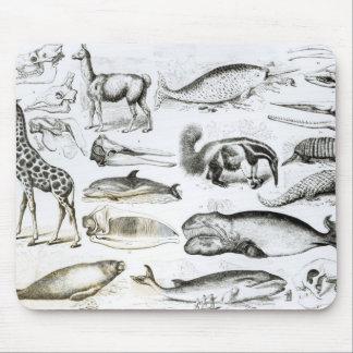 Edentata de los cetáceos tapetes de ratón