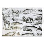 Edentata de los cetáceos tarjeta de felicitación