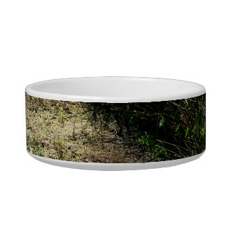 Edge of pond reed and single plant cat water bowls