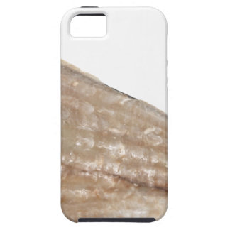 Edge of Seashell. Close Up Picture. iPhone 5 Cover