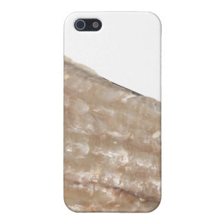 Edge of Seashell. Close Up Picture. Cover For iPhone 5