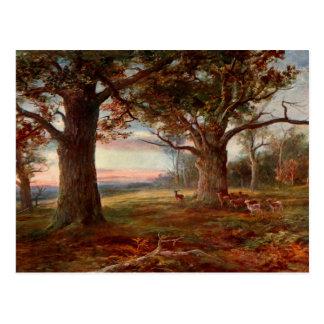 Edge of Sherwood Forest Postcard