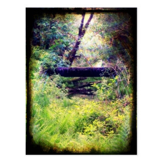 Edge of the Forest Postcard