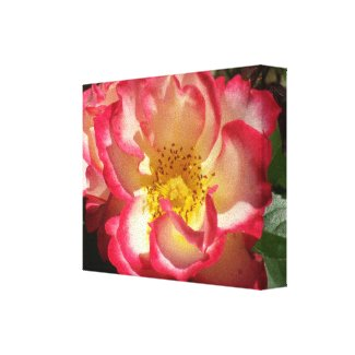 Edged in Raspberry Rose Canvas Print