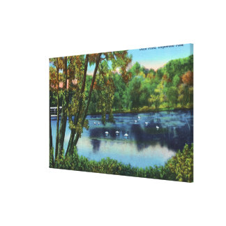 Edgewood Park View of the Duck Pond Stretched Canvas Print