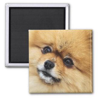 Edgrrrr #1 2 inch square magnet