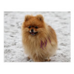 Edgrrrr #2 - Pomeranian