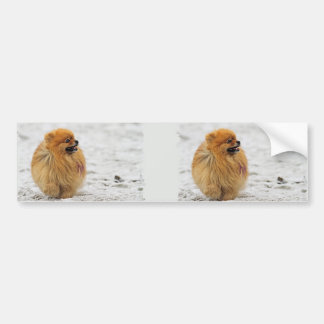 Edgrrrr #3 - Pomeranian Bumper Sticker
