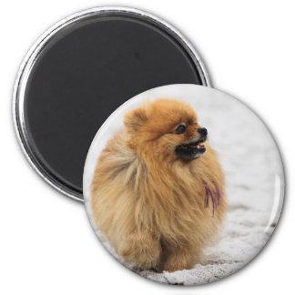 Edgrrrr #3 - Pomeranian Imán Redondo 5 Cm