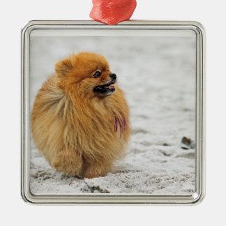 Edgrrrr #3 - Pomeranian Ornaments