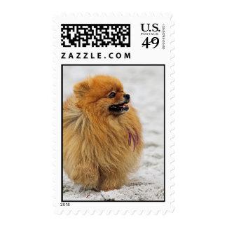 Edgrrrr #3 - Pomeranian Postage Stamps