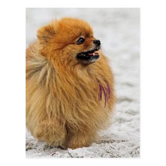 Edgrrrr #3 - Pomeranian Postal