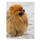 Edgrrrr #3 - Pomeranian Postcard