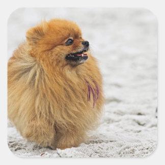 Edgrrrr #3 - Pomeranian Sticker