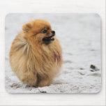 Edgrrrr #3 - Pomeranian Tapetes De Ratón