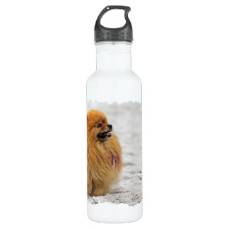 Edgrrrr #3 - Pomeranian Water Bottle