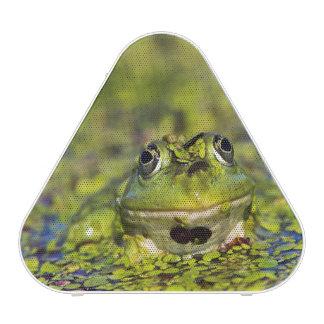 Edible Frog in the Danube Delta Bluetooth Speaker