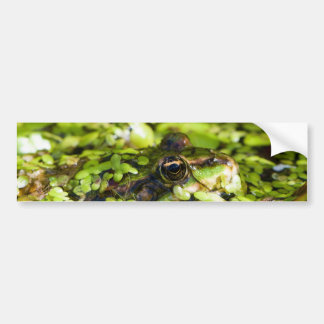 Edible Frog Pelophylax kl. Esculentus Car Bumper Sticker